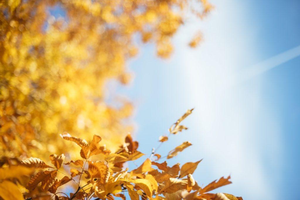 autumn plumbing and heating tips